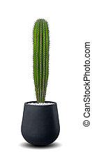 pflanze, aus, freigestellt, echinopsis, eingetopft hat, kaktus, weißes