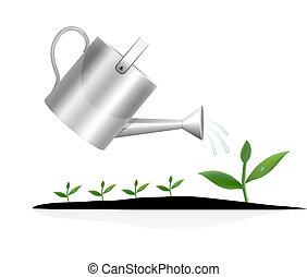 pflanze, bewässerung, junger, buechse