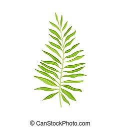 pflanze, blatt, farn, dekorativ, weißer hintergrund, freigestellt