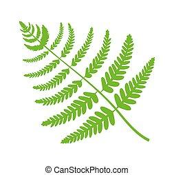 pflanze, blatt, groß, abbildung, farn, vektor, grün