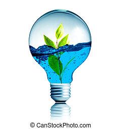 pflanze, eco, licht, energie, begriff, grün, wachsen,...