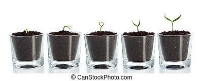 pflanze, evolutionsphasen
