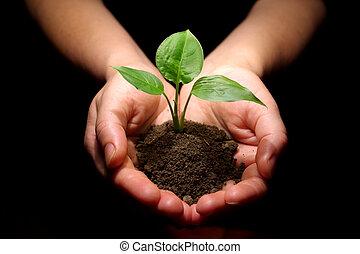 pflanze, gleichfalls, in, hände
