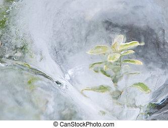pflanze, ice-bound
