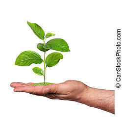 pflanze, in, a, hand, freigestellt