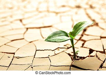 pflanze, in, getrocknete , gebrochener schlamm