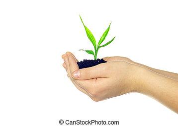 pflanze, in, hände
