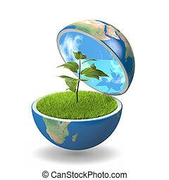 pflanze, innenseite, planet