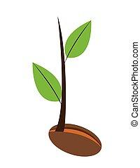 pflanze, junger
