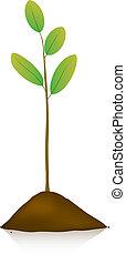 pflanze, junger, boden