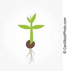 pflanze, keimen, setzling