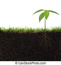 pflanze, mit, wurzeln