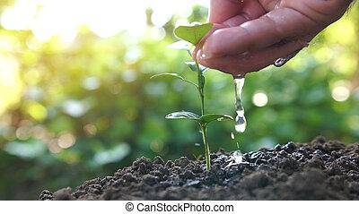 pflanze, natur, grün, sunlight., hintergrund, wachsen