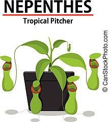 pflanze, nepenthes, topf, freigestellt, grün weiß