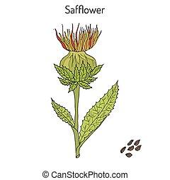 pflanze, oel, saflor, tinctorius, carthamus