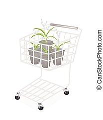 pflanze, satz, shoppen, dracaena, karren