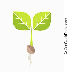 pflanze, seedling.