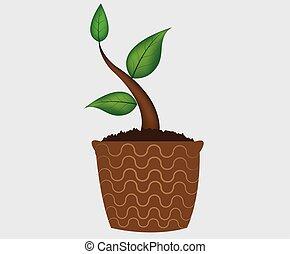pflanze, -, topf, hintergruende, junger, freigestellt, vektor, weißes