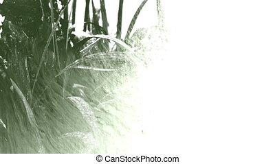 pflanze, unter, regen, tröpfchen, tinte