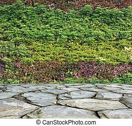 wand gr n kleingarten senkrecht farn kleingarten stockbild suche fotos und foto. Black Bedroom Furniture Sets. Home Design Ideas