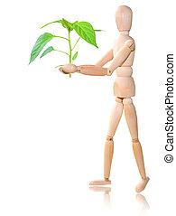 pflanze, weißes, holz, hintergrund, mann