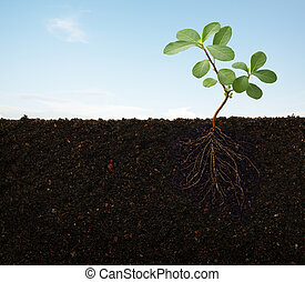 pflanze, wurzeln