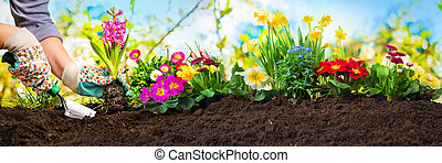 pflanzen, blumen, kleingarten