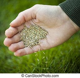 pflanzende samen, gras, hand
