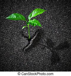 pflanzenkeim, bricht, begriff, asphalt