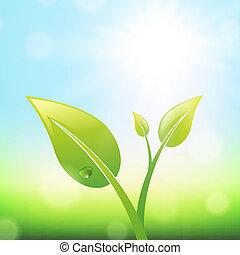 pflanzenkeim, grün