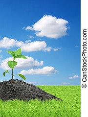 pflanzenkeim, hintergrund, freigestellt, weißes, grün