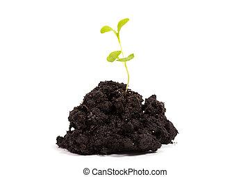 pflanzenkeim, pflanze, grün, haufen, schmutz
