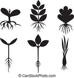 pflanzenkeim, satz, silhouette