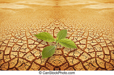 pflanzenkeim, zweig, in, droughty, boden