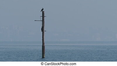 Phalacrocorax or cormorant dries it's feathers on pipe upon water. Big dark bird has a rest before hunt. Black sea shore at Sochi, Russia.