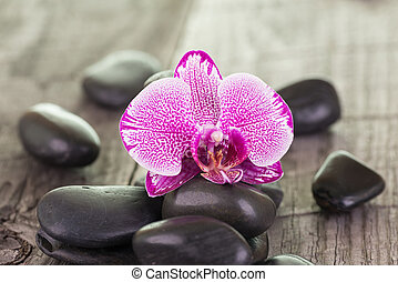 Phalaenopsis orchid and black stones
