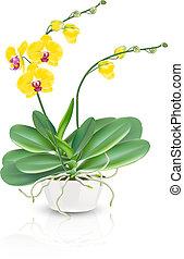 phalaenopsis, orchidee, blumenvase