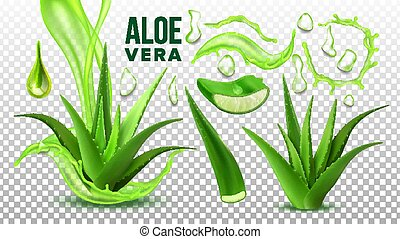 Pharmacy Succulent Aloe Vera Elements Set Vector