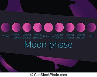 Phases of the moon, from the crescent to full moon. Purple color, vector illustration
