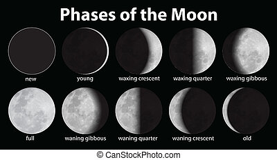 Phases of the Moon - Illustration of the phases of the moon