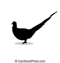 Pheasant bird black silhouette animal. Vector Illustrator.