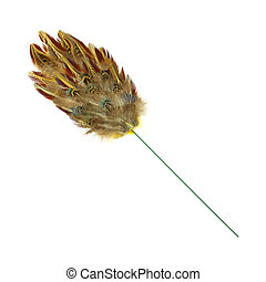 Pheasant feather duster