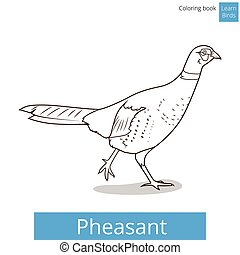 Pheasant learn birds coloring book vector