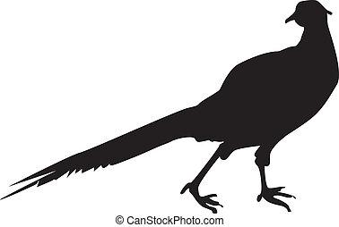 Pheasant Sillhouette - A silhouette of a pheasant, a bird...