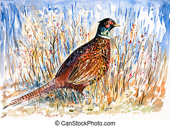 Pheasant watercolor painted. Picture I have created myself with watercolors.