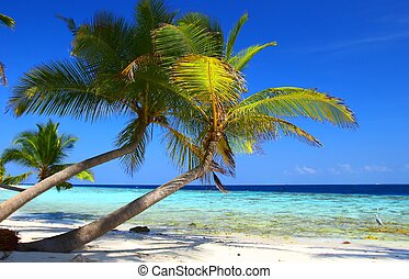 phenomenal, praia, com, coqueiros, e, pássaro