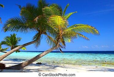 phenomenal, sandstrand, mit, palmen, und, vogel