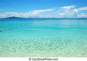 phi, île, clair, turquoise, eau océan, indien, thaïlande