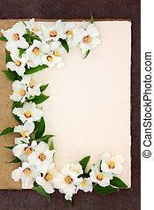 Philadelphus Flowers - Philadelphus mock orange flower...