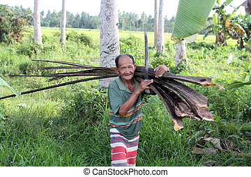 Philippine wood-cutter